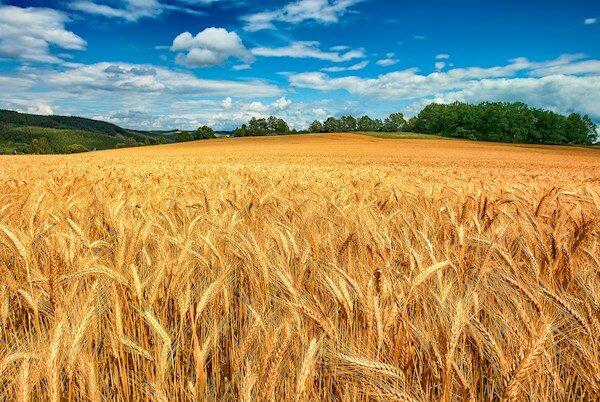 معافیتهای مالیات بر درآمد کشاورزی